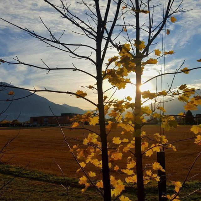 newday autunno lagomaggiore lakemaggiore verbano ticino myasconalocarno visitticino tessin inlovewithswitzerlandhellip